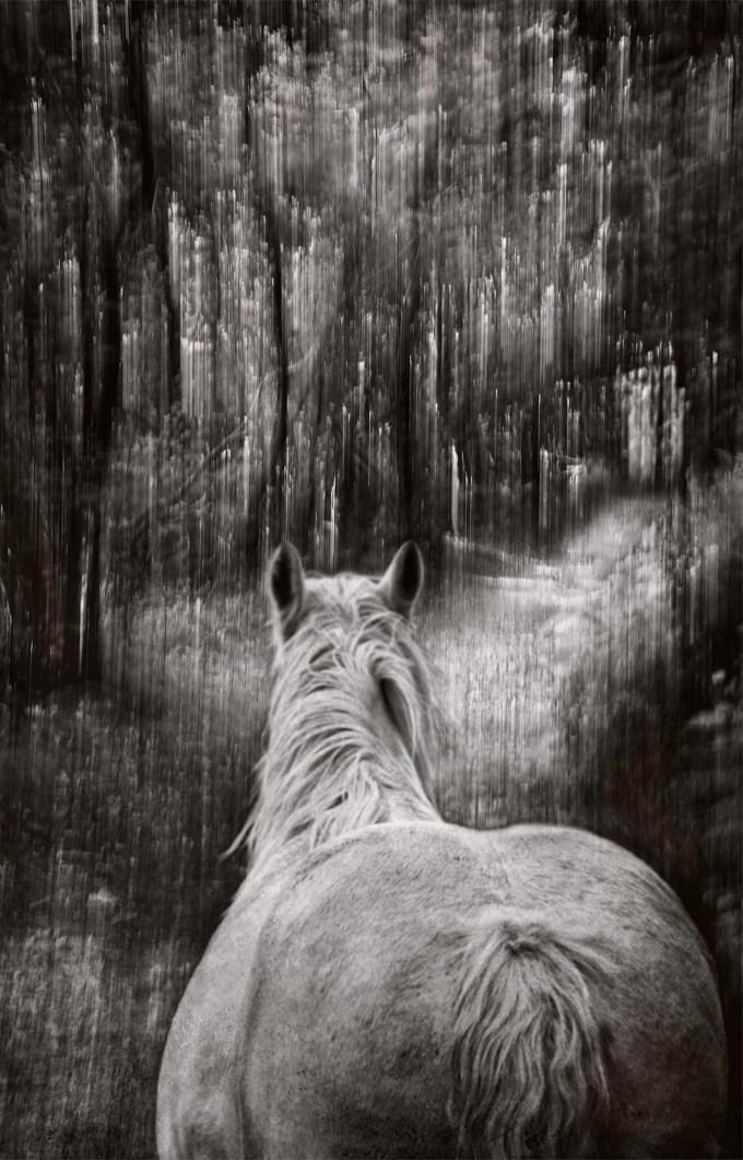 Among the Trees © Mary Aiu