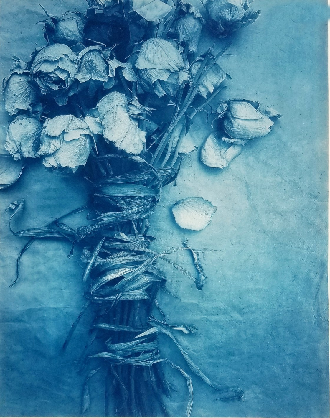 Bound Roses © Diana Bloomfield