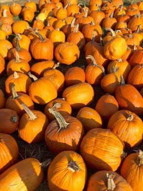 The Pumpkin Patch!