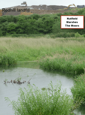 Nutfield Marshes: wetland restoration