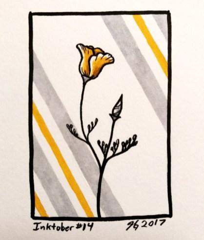 #14 – California Poppy