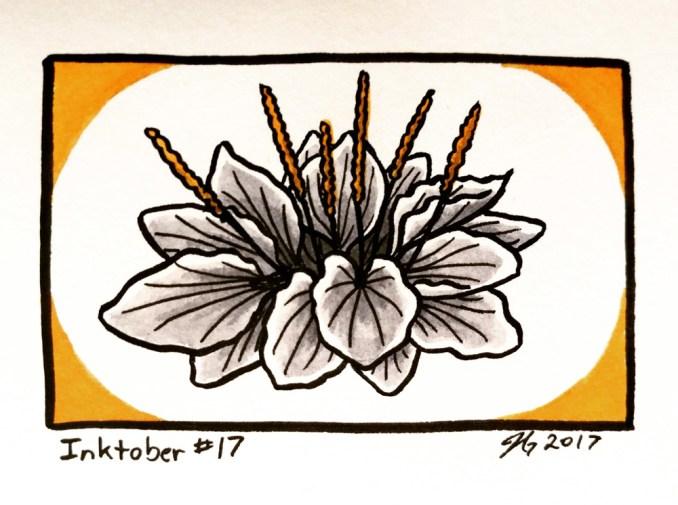 #17 – Common Plantain