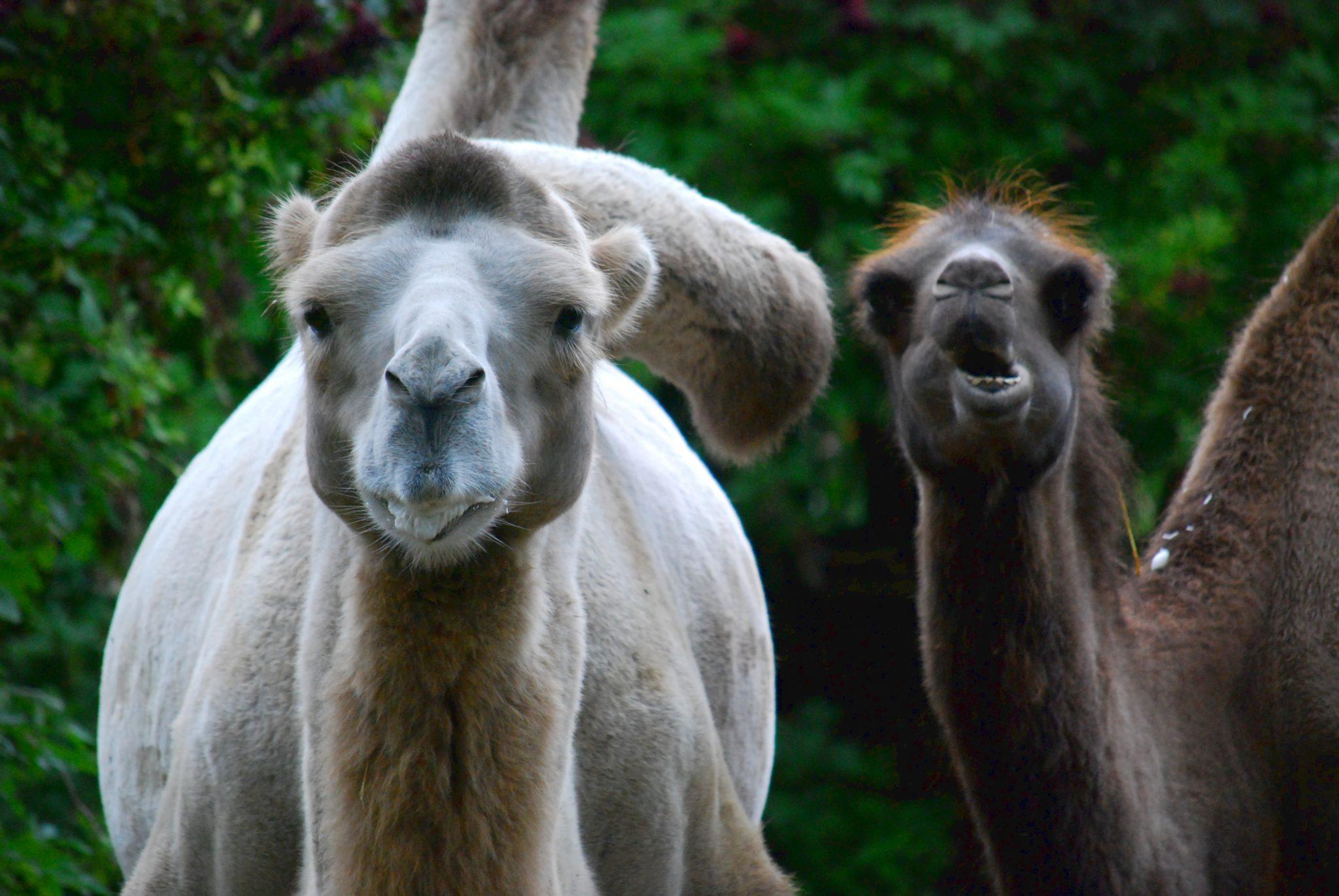 Rheinerlei im Kölner Zoo