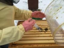 Beträufeln der Bienen mit einer Oxalsäurelösung