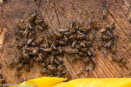 Bienen unter der Abdeckung.