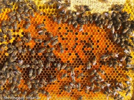 Pollenbrett