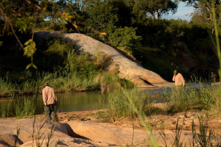 Inyati Game Lodge: George and Solly tracking in the bush