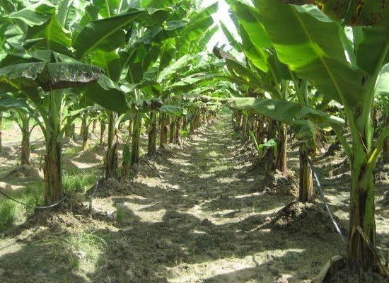 RHIN Biotechnology  Sustain Greening Globally