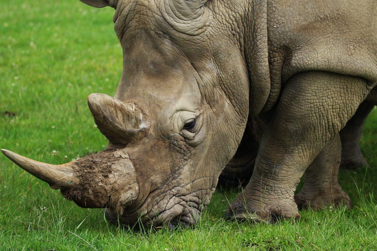 Save the Rhino - Rhino SOS