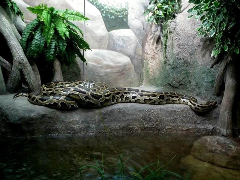 python-262574_960_720