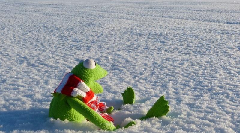 Kermit snow.