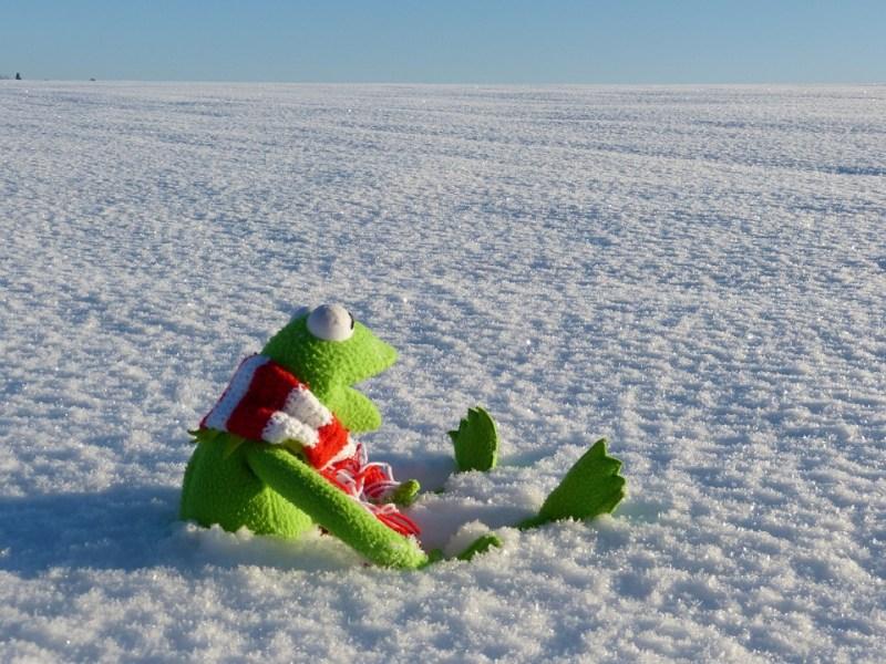 Kermit snow winter