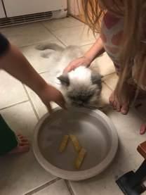 Gotta wash your cheese sticks