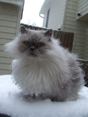 For a Himalayan, he actually didn't like the snow much