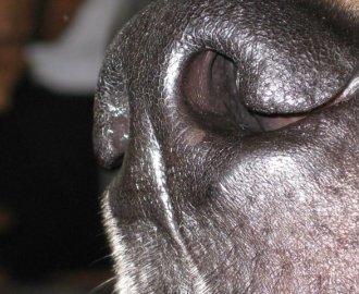 Der-Schnauzengriff-Hund