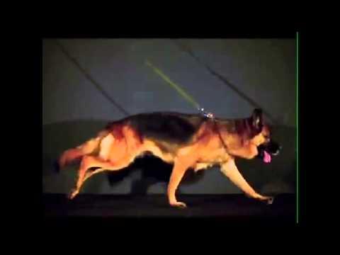 Dog In Motion 01-The German Kennel Club (VDH)