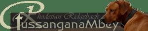 Tussangana mbey 'N Rhodesian Ridgeback Züchter © Bettina Höhfeld, Schleswig-Holstein, Aukrug, Neumünster