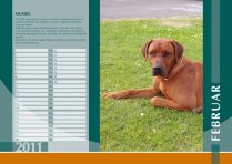 Der Ridgeback in Not Kalender 2011