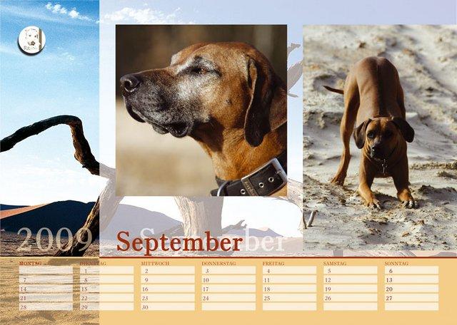 Der Ridgeback in Not Kalender 2009 ( Rückblick alle Monate )