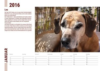 Der Ridgeback in Not Kalender 2016