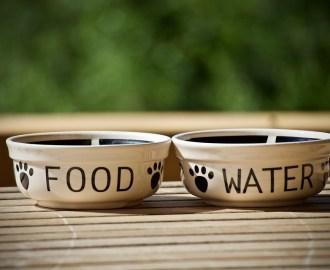 BARF Wie läuft die Verdauung des Hundes ab ...... Ölesind Verbindungen mitgesättigten, oderungesättigten Fettsäuren(eine bis sechs