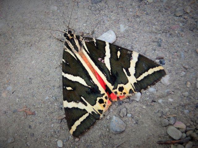 Vallée des Papillons Rhodes