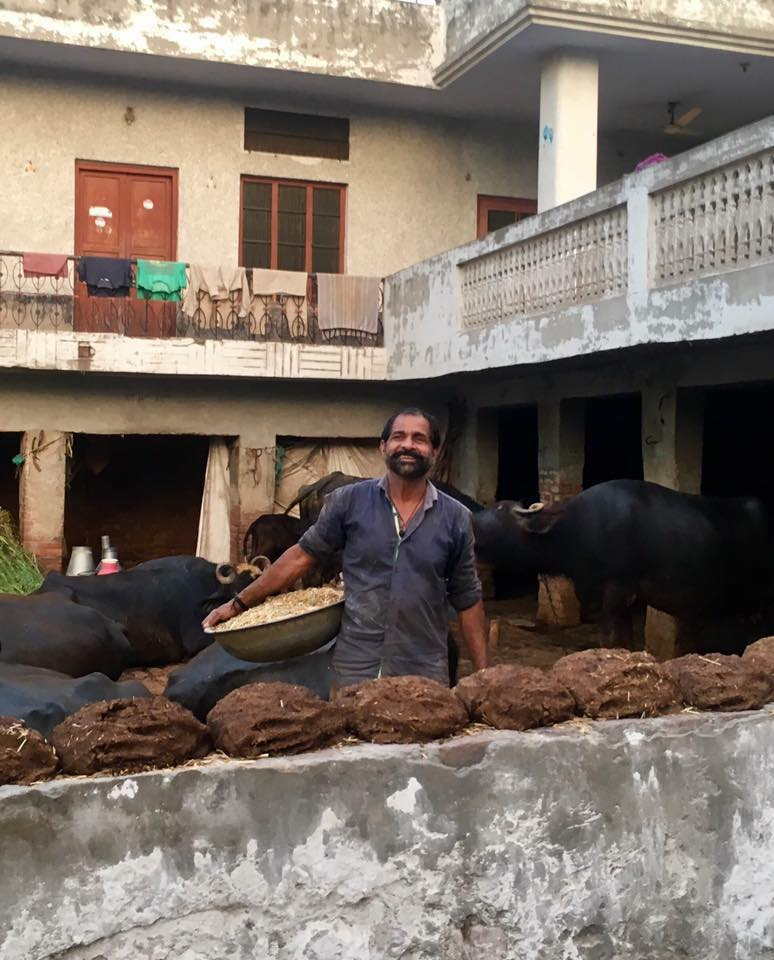 cow pies in India