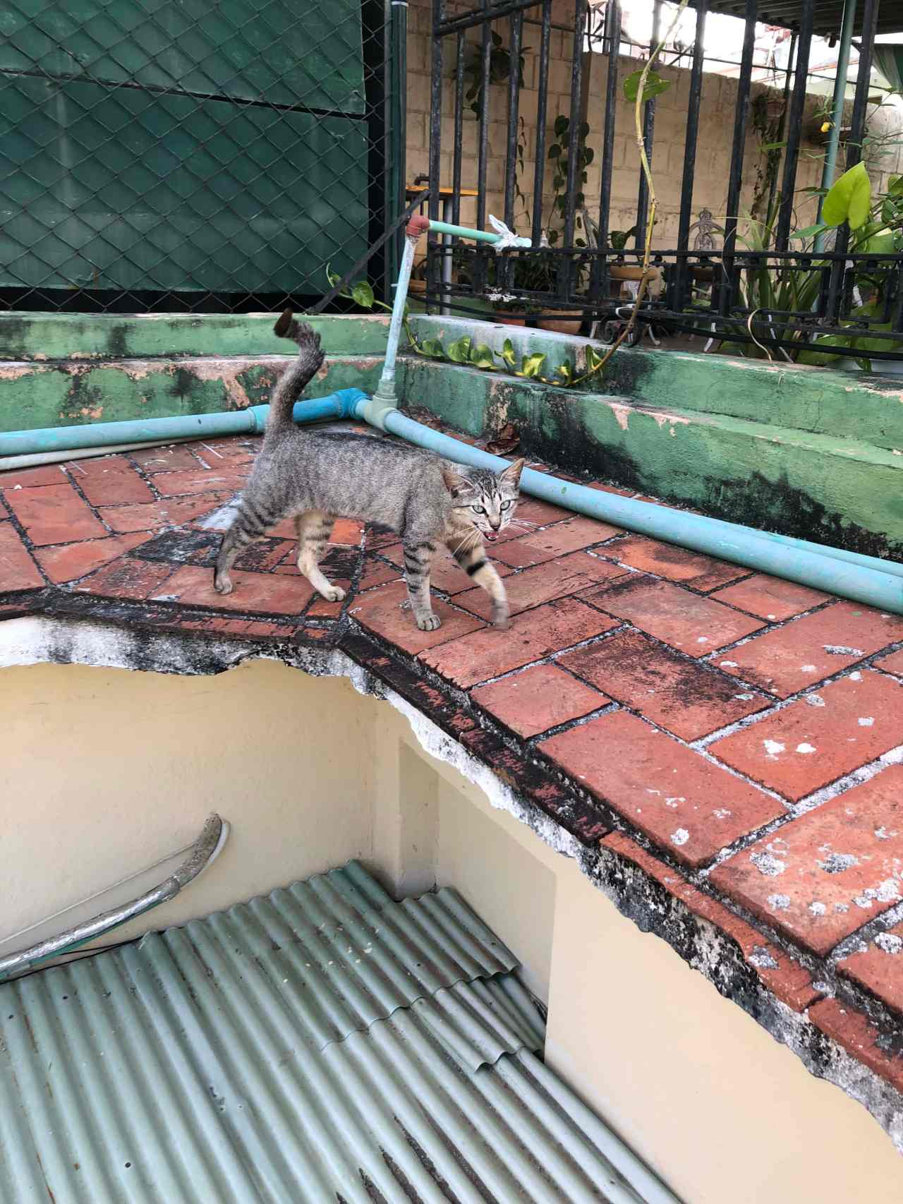 Cat on the rooftops Havana