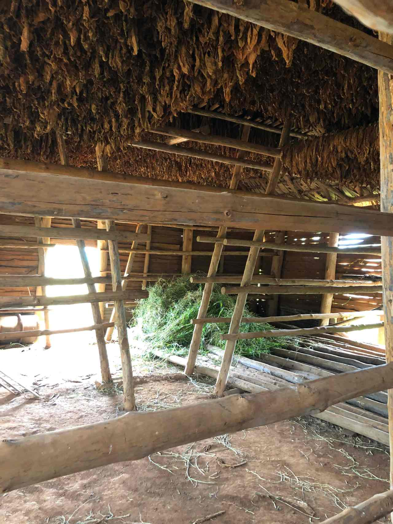 Inside a tobacco drying hut