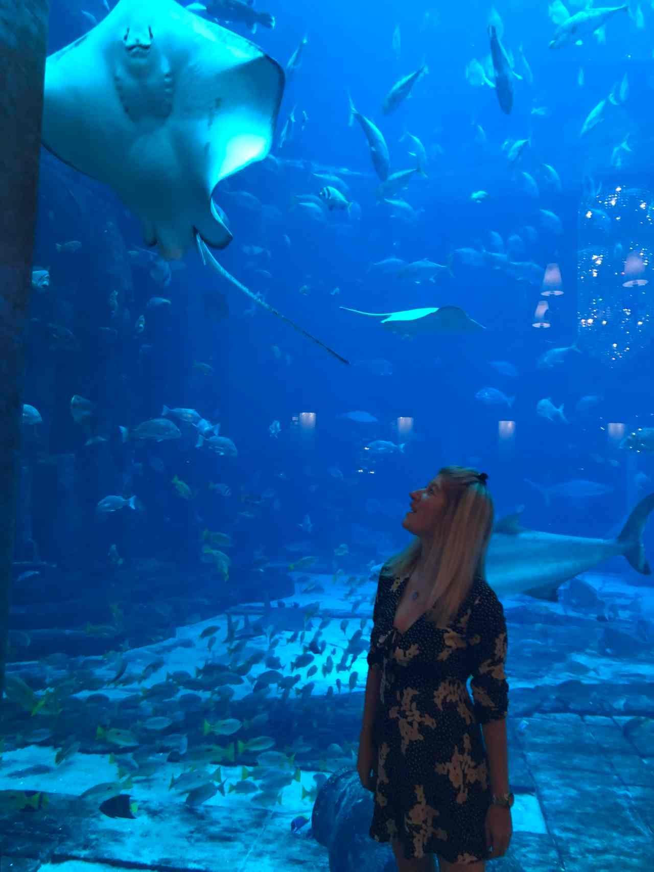 ossiano fish tank dubai
