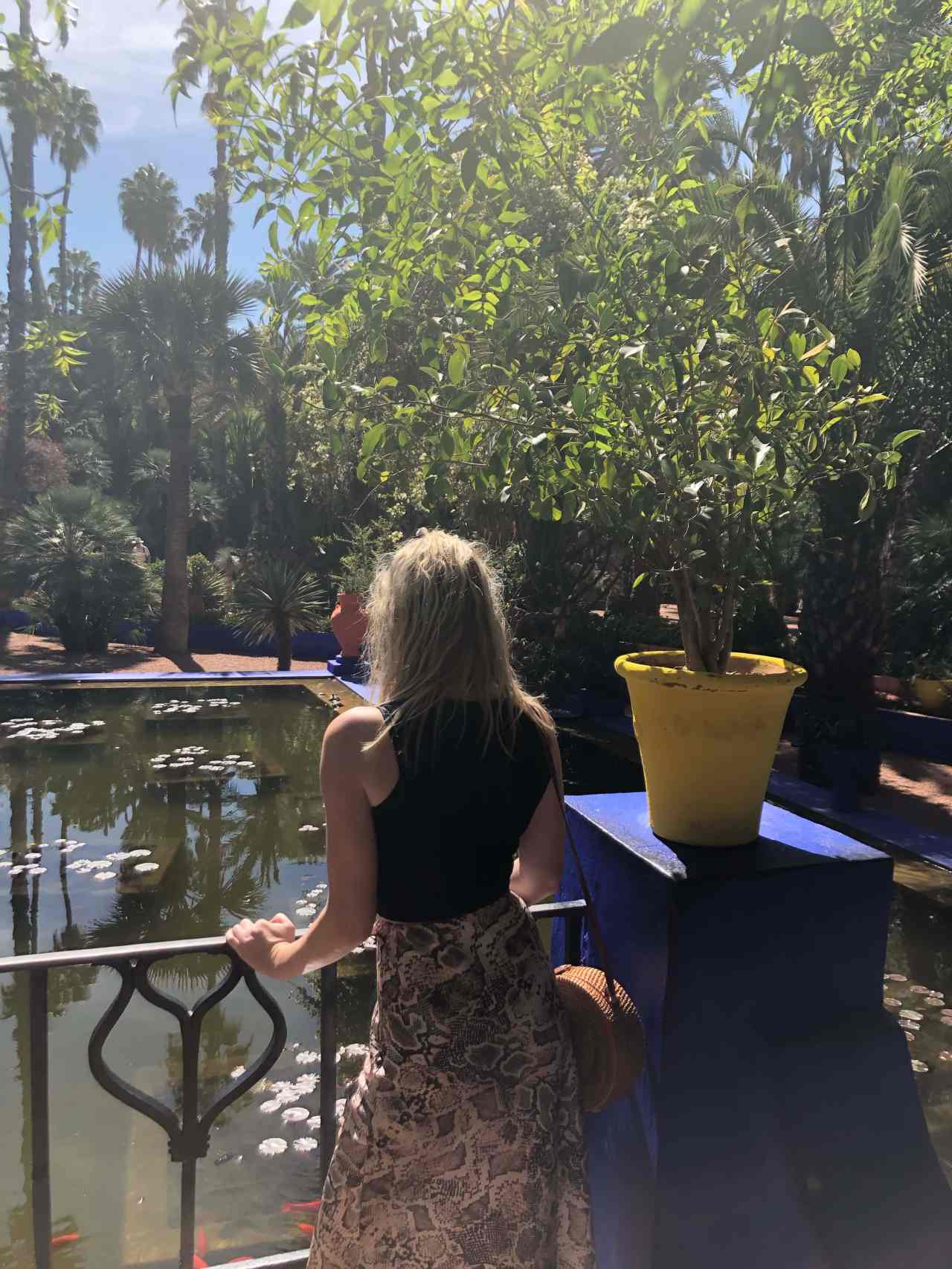 Pond in Le Jardin Majorelle