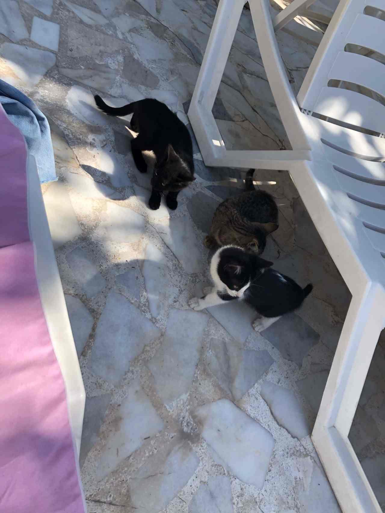 Cats Kose Pension hostel