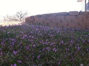 purple winter weeds