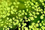 plants photo