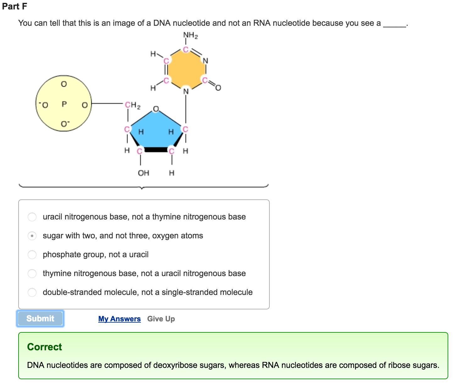 Mastering Biology Chapter 16 Rhs Homework