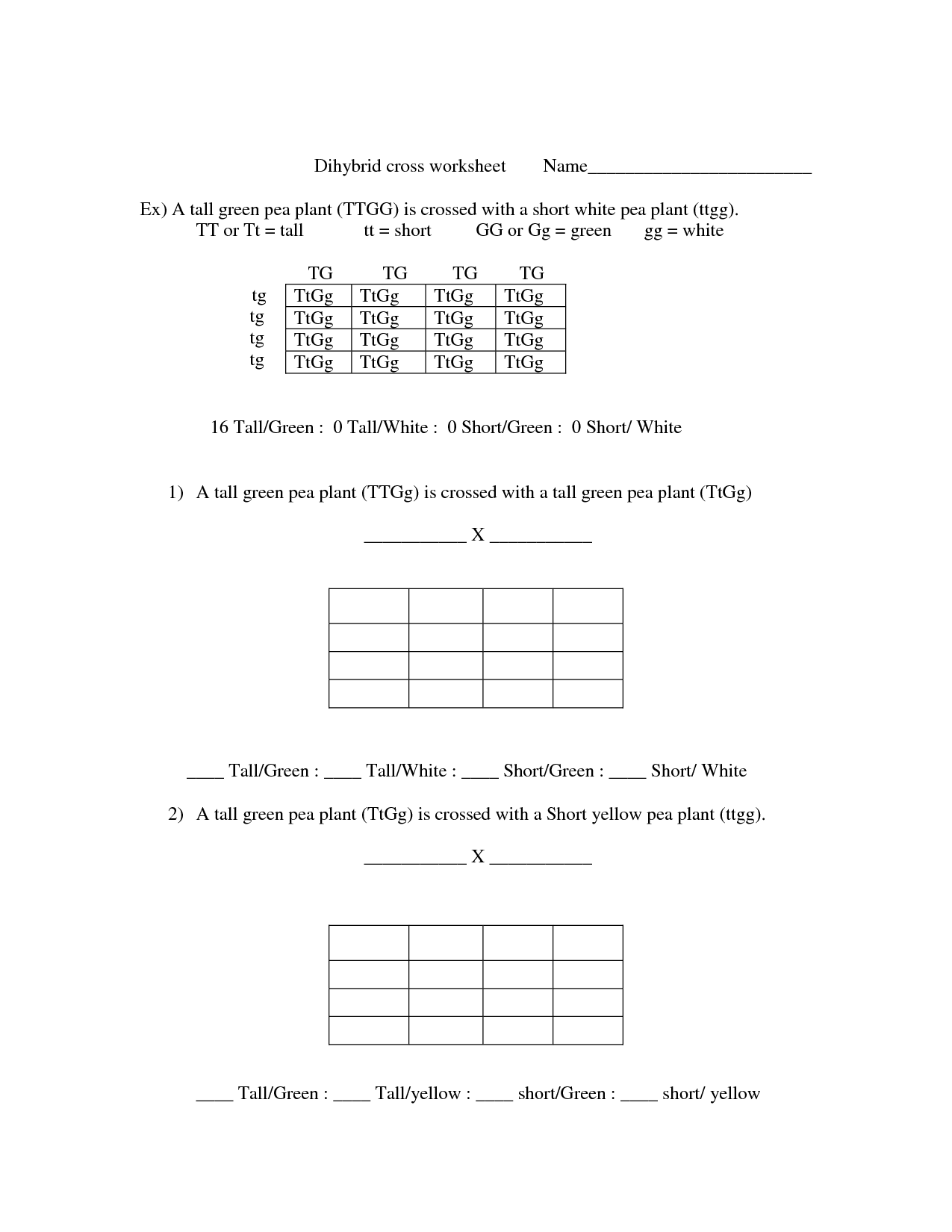 Genetics Worksheet Answers