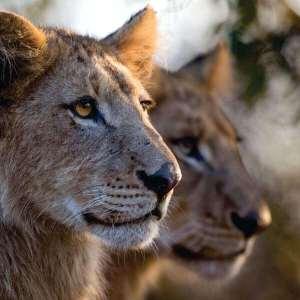 rhulani safaris img under pic 3