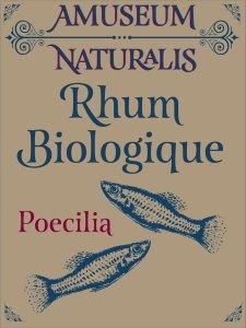 Rhum-Poecilia