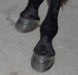 Jimmy's nice hind feet