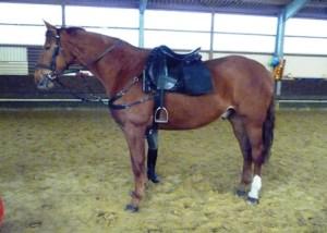 German police horse