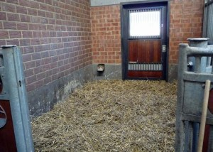 horse stall with straw bedding