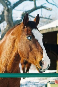 paint horse in winter