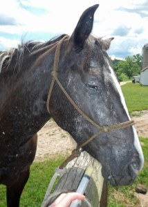 horse with wormer