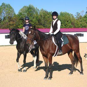 horse with locking stifle
