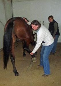 horse bodywork