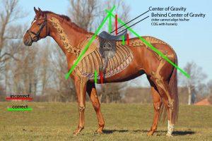 horse saddle fit