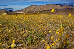 death_valley_0071w
