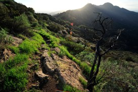 Backside trail to Hollywood sign