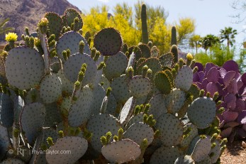 Oro Valley, AZ