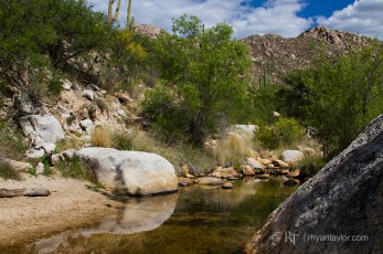 Catalina State Park, AZ